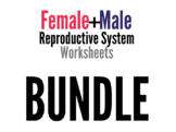Reproductive System Worksheets Bundle
