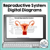 Reproductive Systems (Male & Female) Diagrams for Distance
