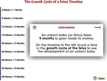Reproductive Systems: The Growth Cycle of a Fetus Timeline - PC Gr.3-8