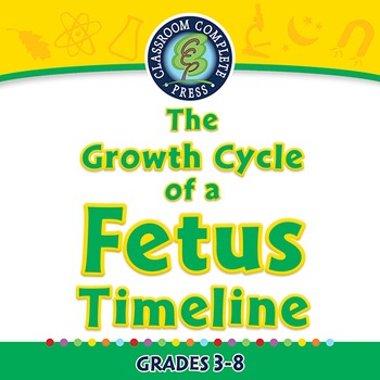 Reproductive Systems: The Growth Cycle of a Fetus Timeline