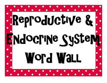 Reproductive and Endocrine Systems Word Wall