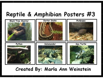 Reptile & Amphibian Posters #3
