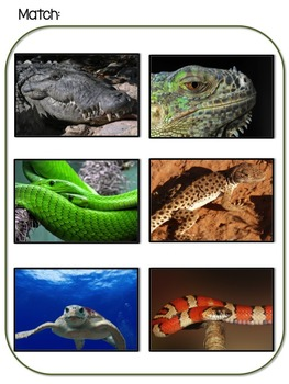 Reptile And Amphibian Themed File Folder Activities Autism Resource