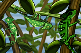 Reptile Clipart: Baby Chameleons FREEBIE