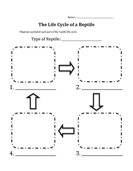 Reptile Life Cycle