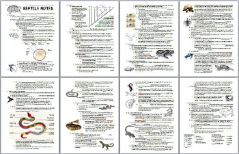 Reptile Notes Handout and Teacher Key (Biology / Zoology)