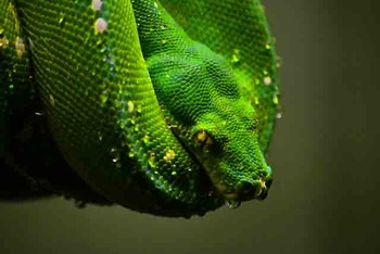 Reptile Photo Clip Art for Commercial Use