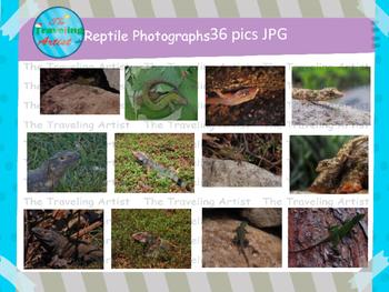 Reptile Photographs Set 1