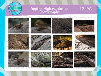 Reptile Photographs Set 3