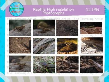 Reptile Photographs Set 3
