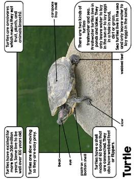 Reptile Reports