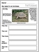 Reptile Reports for First, Second  and Third Grades