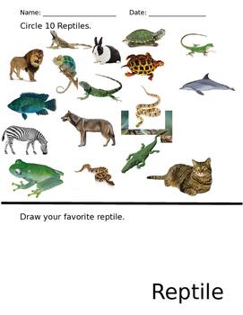 Reptile Review Worksheet
