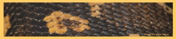 Photo Products - Reptile Theme