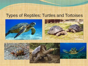 Reptile Week Introduction