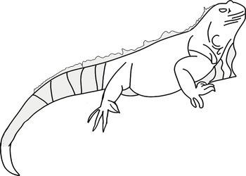 Reptile and Amphibian Clip Art