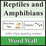 Reptile and Amphibian Word Wall