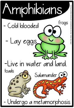 Reptile and amphibians posters