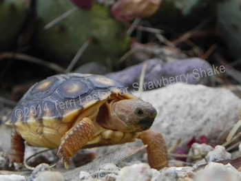 Photos Photographs Reptiles! Science and Nature Personal and Commercial Use