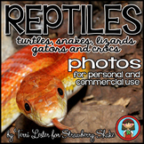 Photos Photographs Reptiles! Science and Nature Personal a