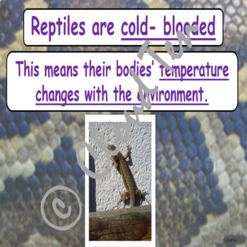 1.10A Reptiles