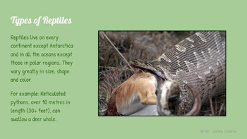 Reptiles: A Life Sciences Slideshow!
