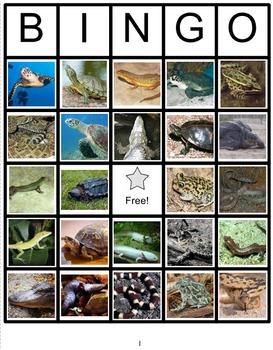 Reptiles & Amphibians Bingo