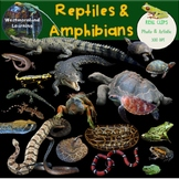 Reptiles & Amphibians Clip Art Photo & Artistic Digital Stickers Frog Life Cycle