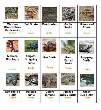 Reptiles & Amphibians Rummy