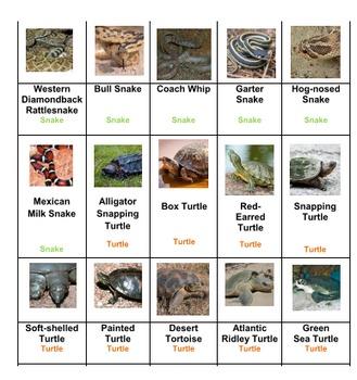 Reptiles & Amphibians Sort Game