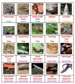 Reptiles & Amphibians Tic Tac Know