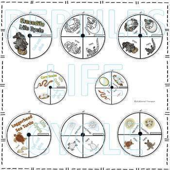 Reptiles Life Cycle Spinner Bundle