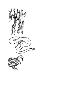 Reptiles Cip Art