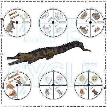 Reptiles Life Cycle Spinner Bundle #2