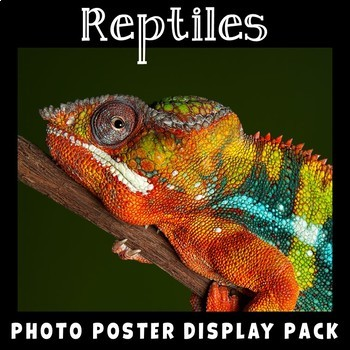Reptiles Photo Poster Display Pack