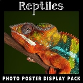 Reptiles | Science Posters | Vocabulary Display
