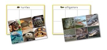 Reptiles Preschool Pack