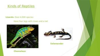 Reptiles Presentation (Editable)