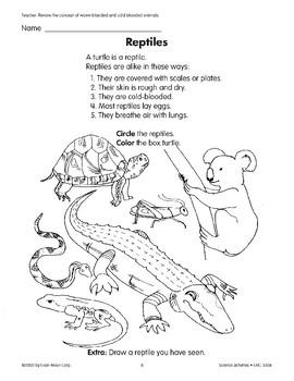 Reptiles/Reptiles and Turtles/La tortuga