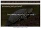 Reptiles! Turtles, Snakes, Iguanas, and More PDF