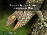 Reptiles! Turtles, Snakes, Iguanas, and More Distance Lear