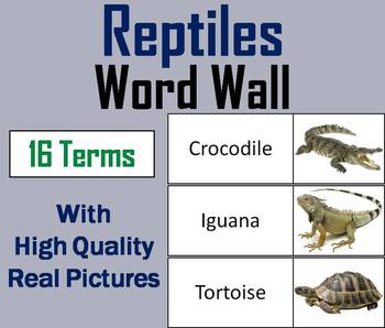 Reptiles Word Wall Cards