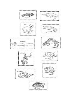 Reptiles and Amphibians