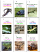 Reptiles and Amphibians Battle
