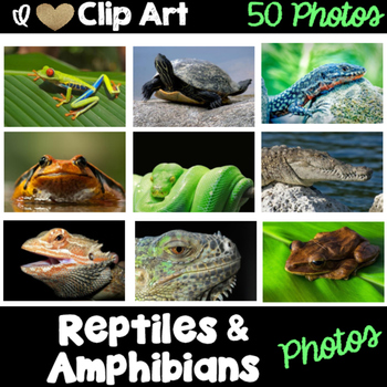 Reptiles and Amphibians Photos