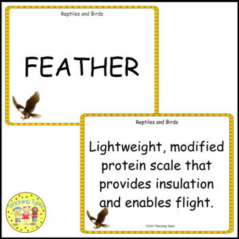 Reptiles and Birds Vocabulary Cards