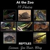 Reptiles at the Zoo - Photos