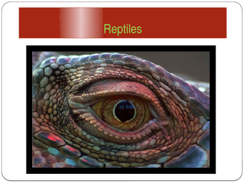 Reptiles power point