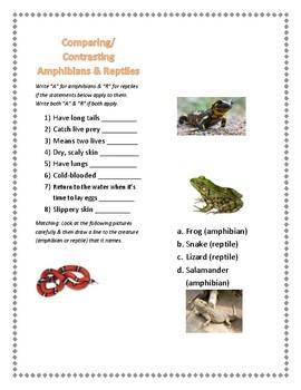 Reptiles vs. Amphibians