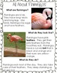 Research (All About Flamingos)